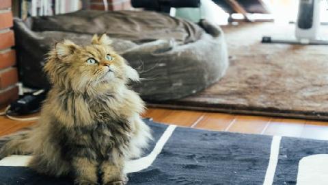 リビング_猫