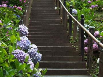 新海誠作品『言の葉の庭』の感想や見所を紹介。ロマンティックな短歌が胸に響きます